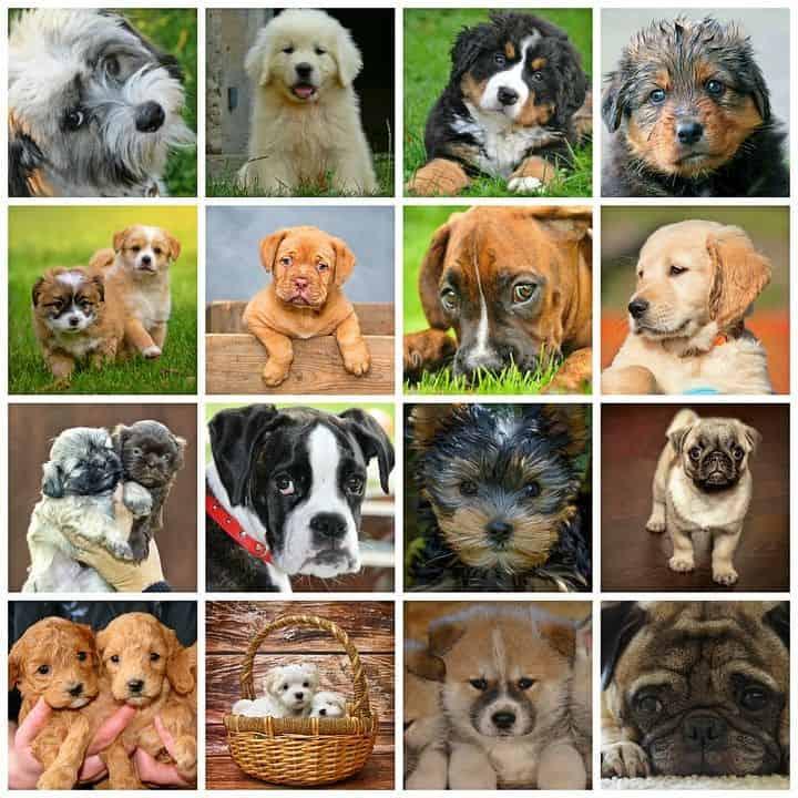 Beliebte Hunderassen im Überblick