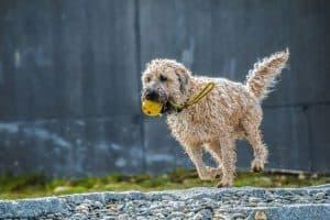 Hund in Bewegung beim Sport